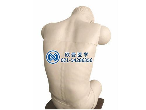 高级综合穿刺术技能训练模拟人(前倾坐位)