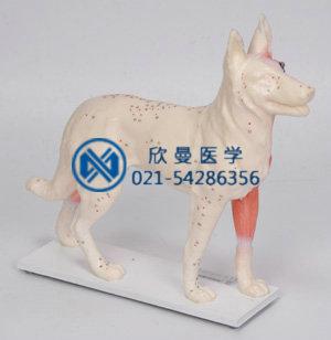 狗体针灸模型右侧面显示穴位