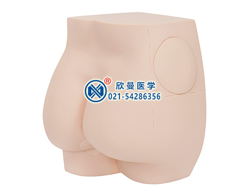 XM-TB臀部肌肉注射模型