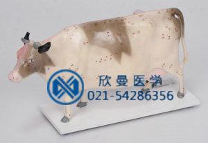 牛体穴位模型侧面结构特征