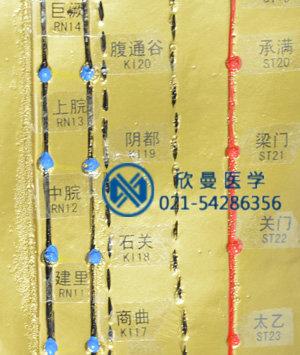 针灸铜人穴位特写,清晰可见。