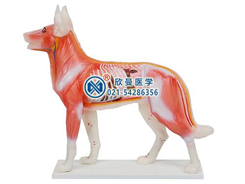 犬体针灸模型整体结构