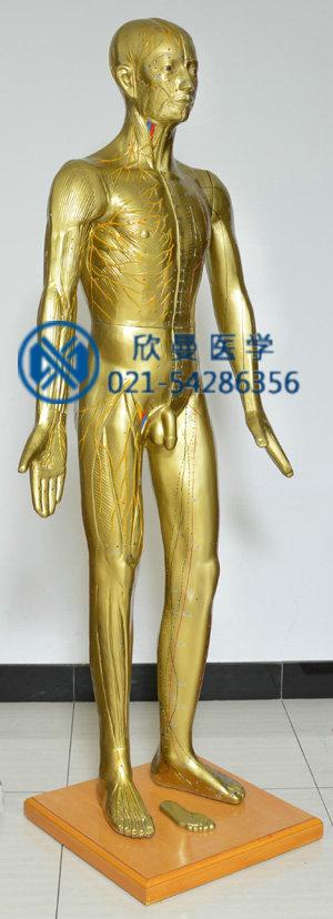 针灸铜人模型右侧面
