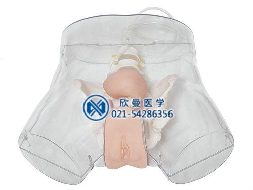 透明女性导尿模型