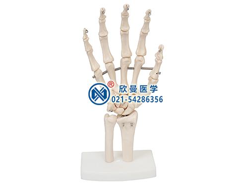 XM-145手骨模型