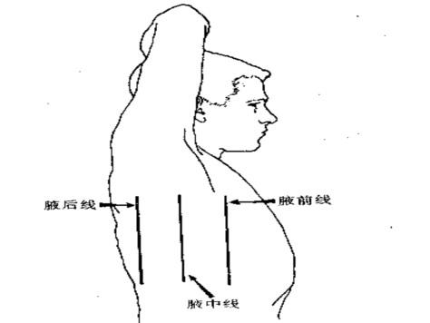 面部皮肤结构图示意图