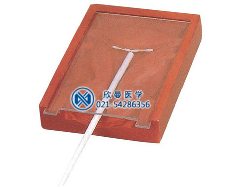 高级女性宫内避孕器训练模型