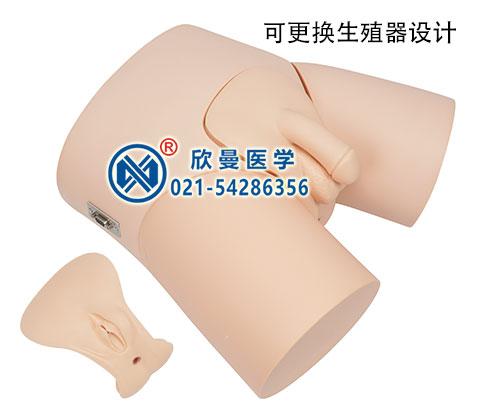电子男性导尿操作模型