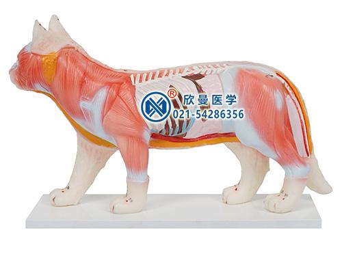 猫体针灸模型正面特征