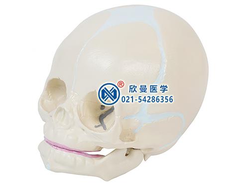 XM-117新生儿头颅骨模型