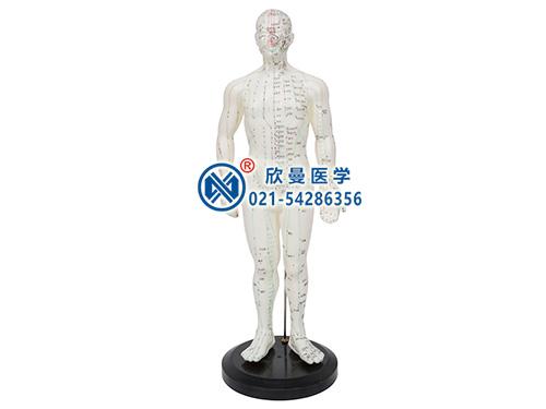 XM-50针灸人模型
