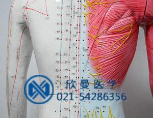 人体督脉经络图解 人体经络走向图解 人体十二条经络图解
