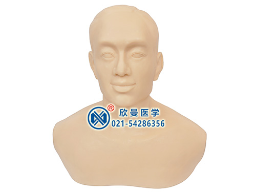 XM-ZCN针灸头部训练模型,头部针灸训练模型