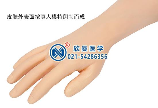 静脉穿刺手臂训练模型主要结构