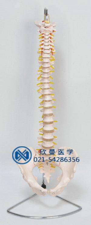 脊柱模型整体结构