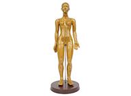 针灸铜人模型(女性48cm)