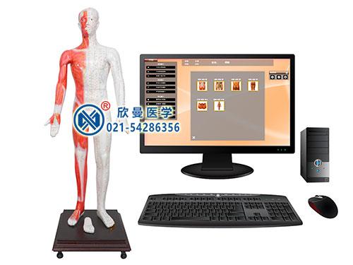 MAW-170E多媒体人体针灸穴位发光模型