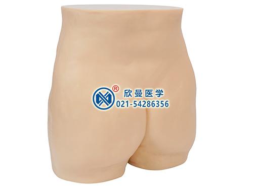 针灸臀部训练模型