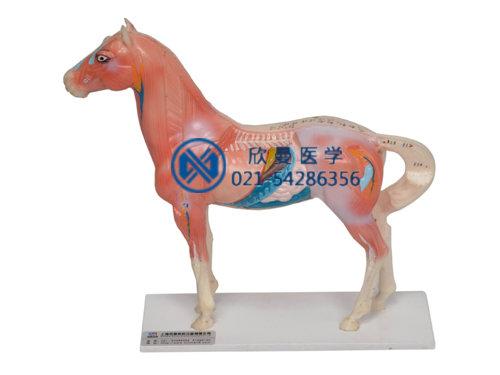 XM-602马体针灸模型