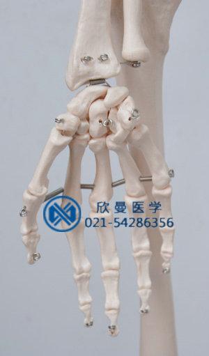 模型关节部位结构