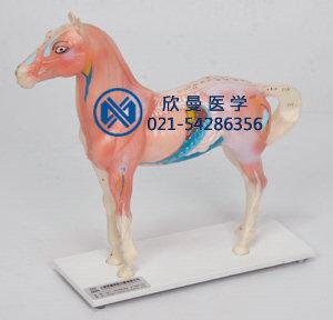 马体针灸模型整体结构