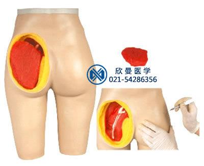 带解剖结构臀部注射仿真模型