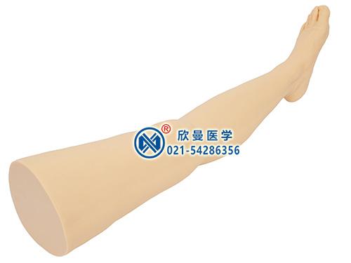 针灸腿部训练模型 针刺训练腿部模型