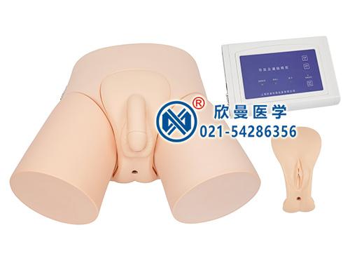 XM-DD电子导尿模型,电子导尿灌肠教学实习模型