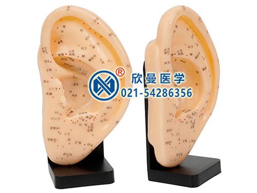 XM-23耳针灸模型,耳针灸穴位模型