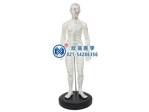XM-48人体针灸穴位模型