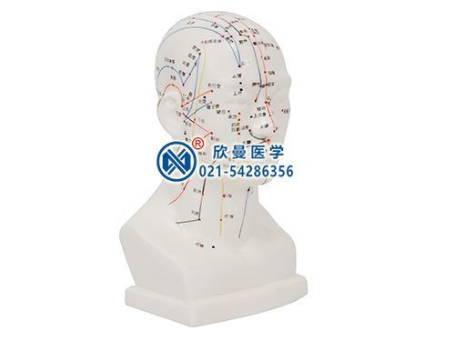 XM-20头部四功能针灸腧穴模型