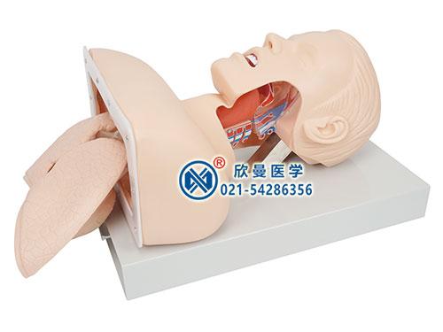 XM-50-1高级人体气管插管训练模型,气管插管模拟人,气管插管模型
