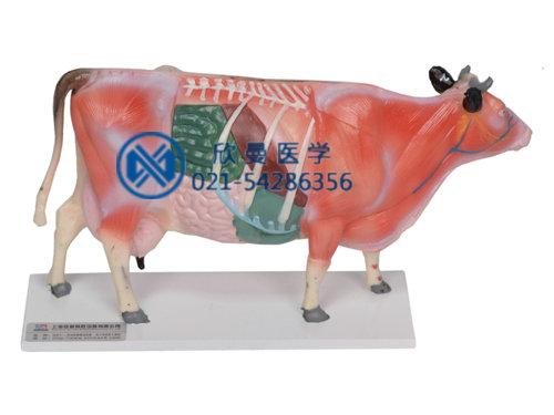 XM-604牛体针灸模型,动物针灸模型