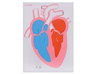 心脏收缩、舒张与瓣膜开闭演示模型