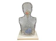 小儿多功能透明鼻饲及洗胃模型