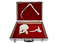 人体骨杠杆分类模型