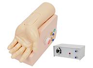 动脉血气分析训练模型