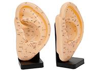 耳针灸模型23CM