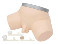 前列腺检查操作仿真模型
