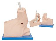 肩关节镜检查模型