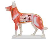 狗体针灸模型 犬体针灸模型