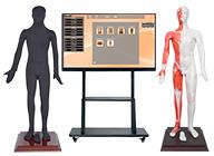 55寸多媒体人体针灸穴交互数字平台