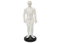 针灸人模型(男性)