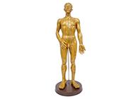 人体针灸铜人模型